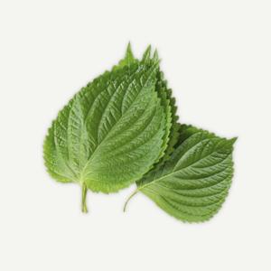 sesame-leaves